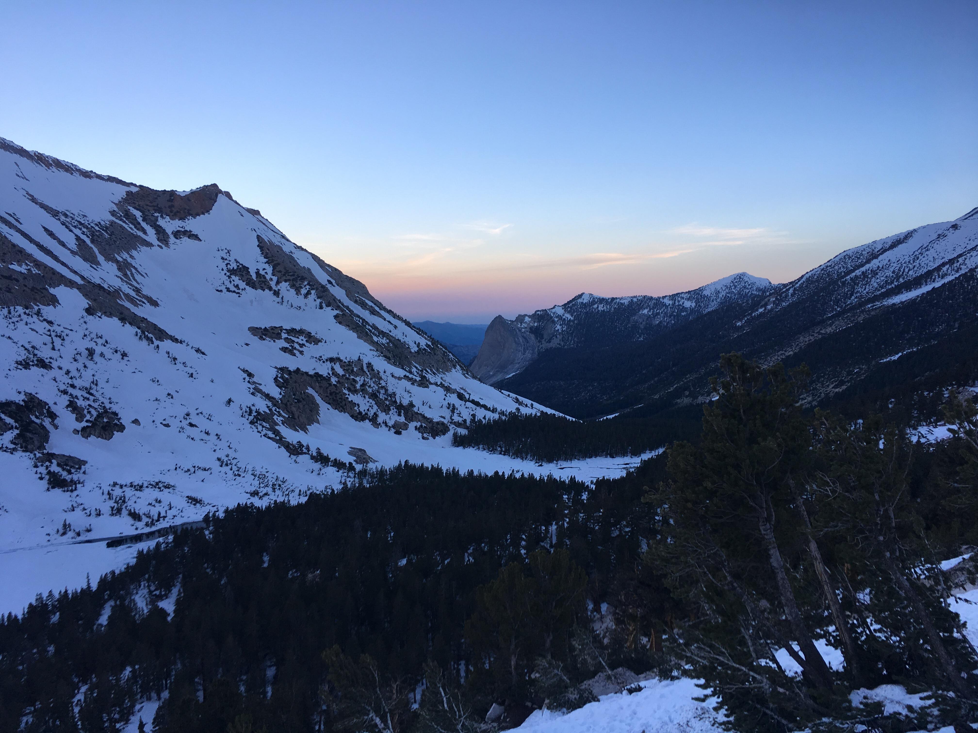 Sierra Snow Swallows