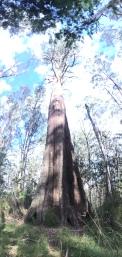 An 86m tall giant