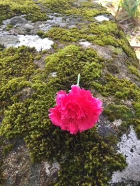 A flower from the War Memorial