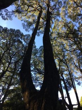 Sexy tree legs