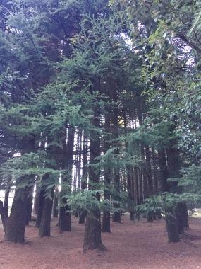 The creepy pines